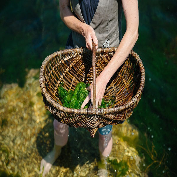 Photograph of Caroline Davey from Fat Hen, The Wild Food Cookery School, foraging seaweed in Cornwall