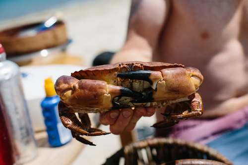 Photograph of a fish shellfish cookery course at Fat Hen, the Wild Cookery School in Cornwall