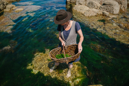 Photograph of a seaweed foraging cookery course at Fat Hen, the Wild Cookery School in Cornwall