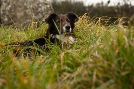 Photograph of Molly the collie, resident at Fat Hen