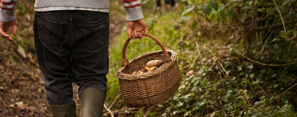 cornwall foraging